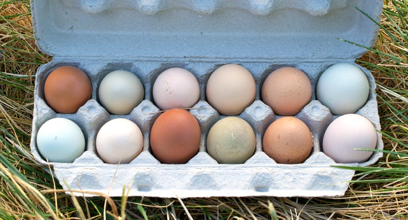 Rosewater Farm and Dairy • Eggs